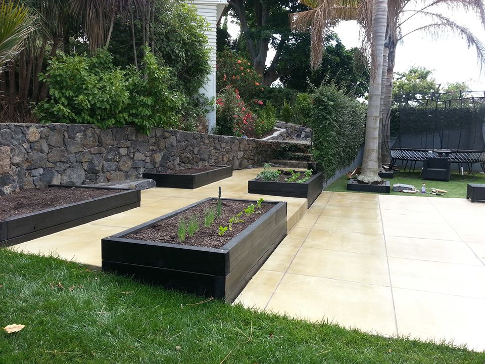 vege gardens on coloured concrete